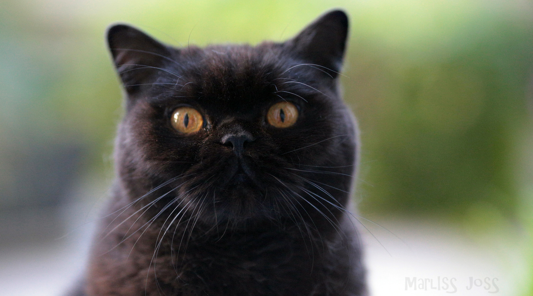 The Cat Music Video