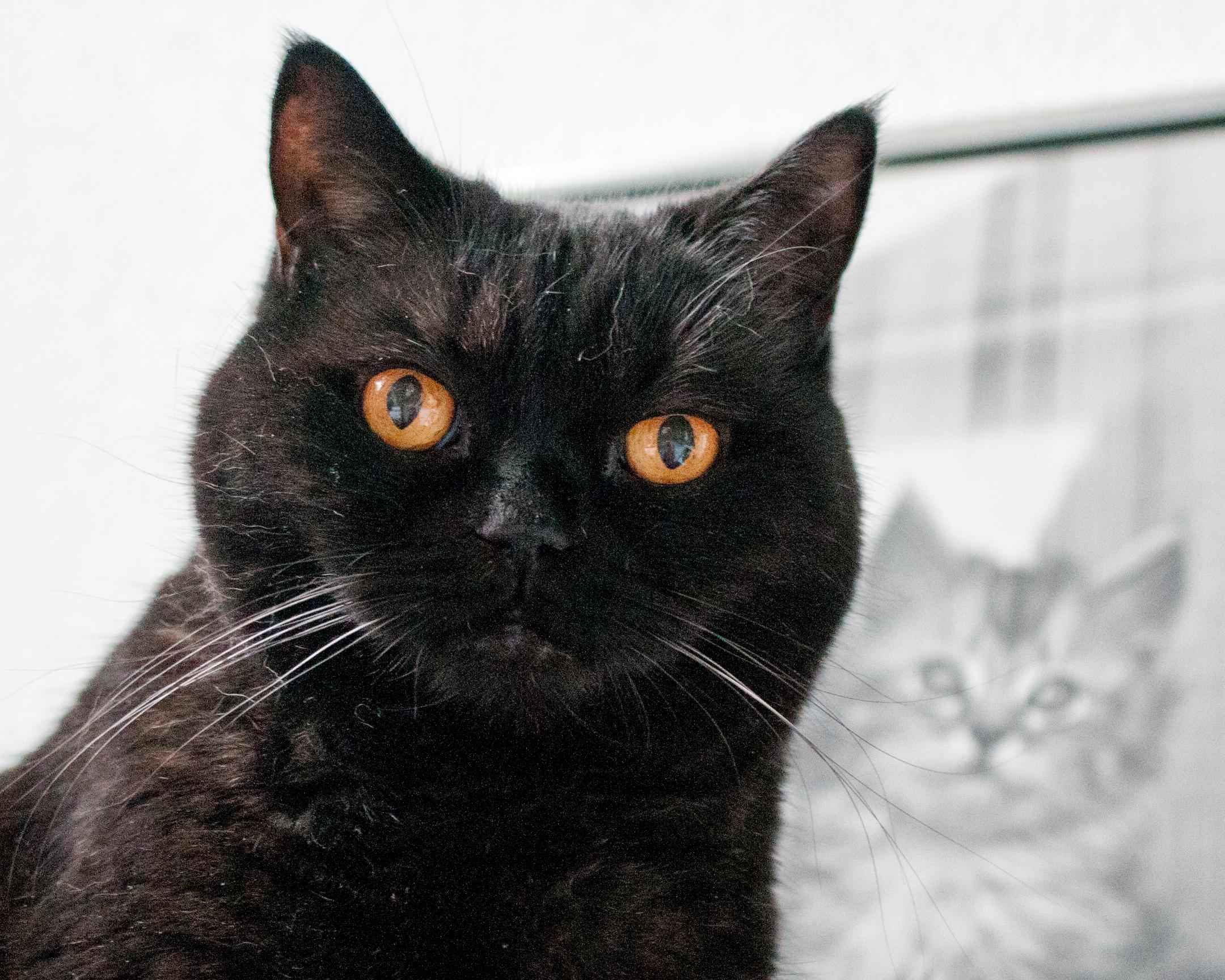 schwarze katze weiГџer kater